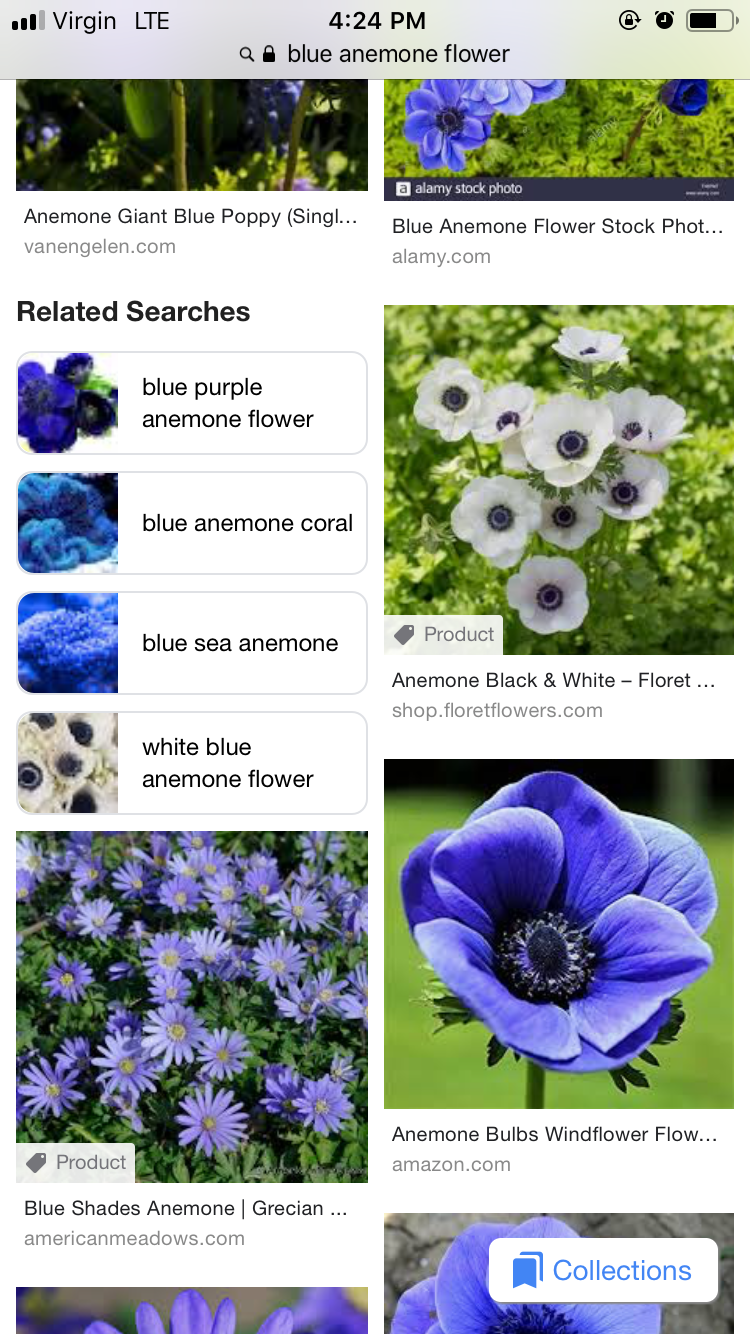 Pin By Brittani On Tats Anemone Flower Coral Blue Blue Poppy