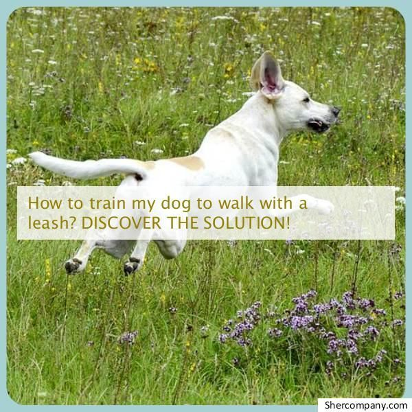 Learn About Dog Body Language Check Out The Pic For Various Dog