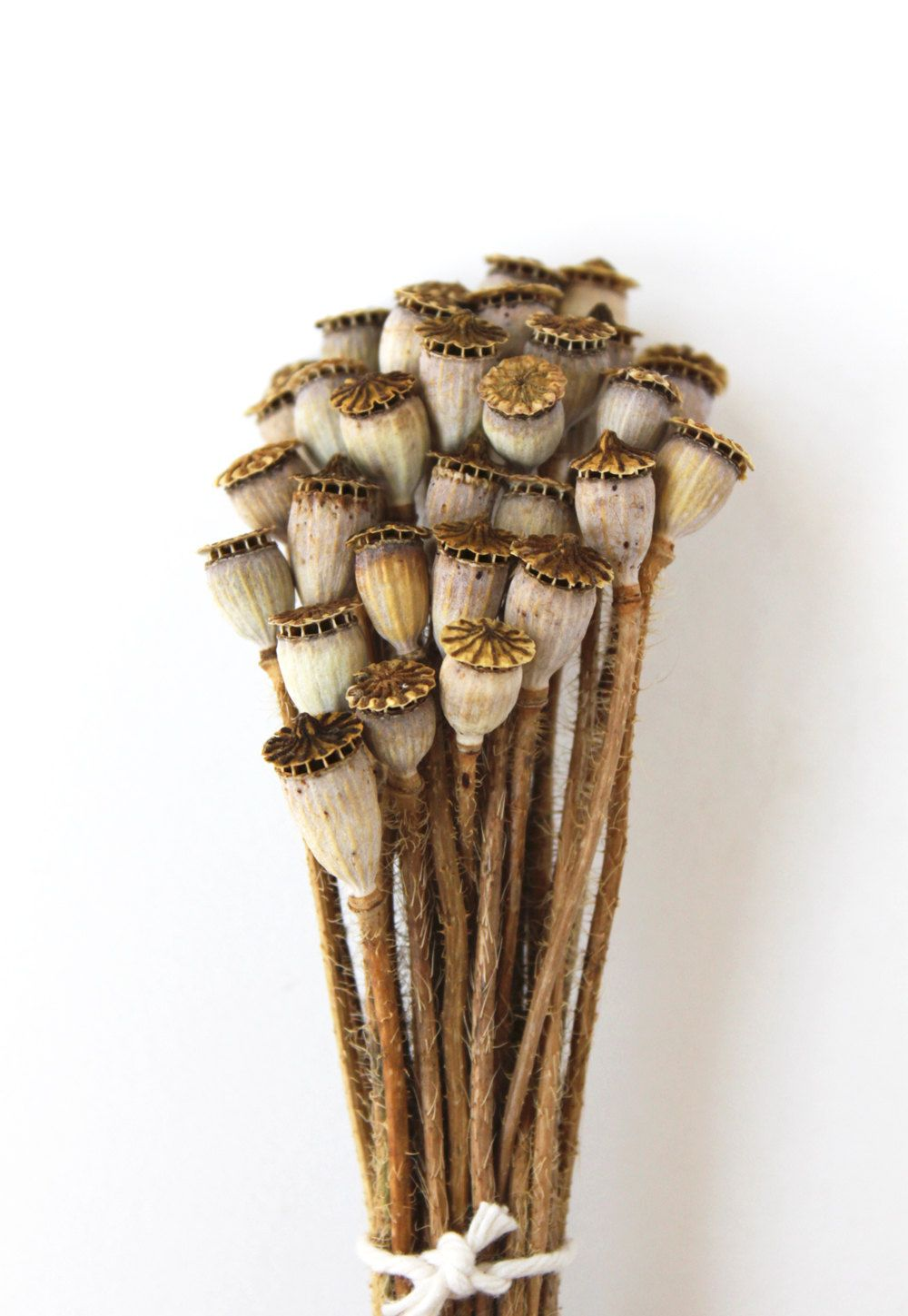 Dried Poppy Pods Organic Home Grown Woodland Natural Rustic Brown
