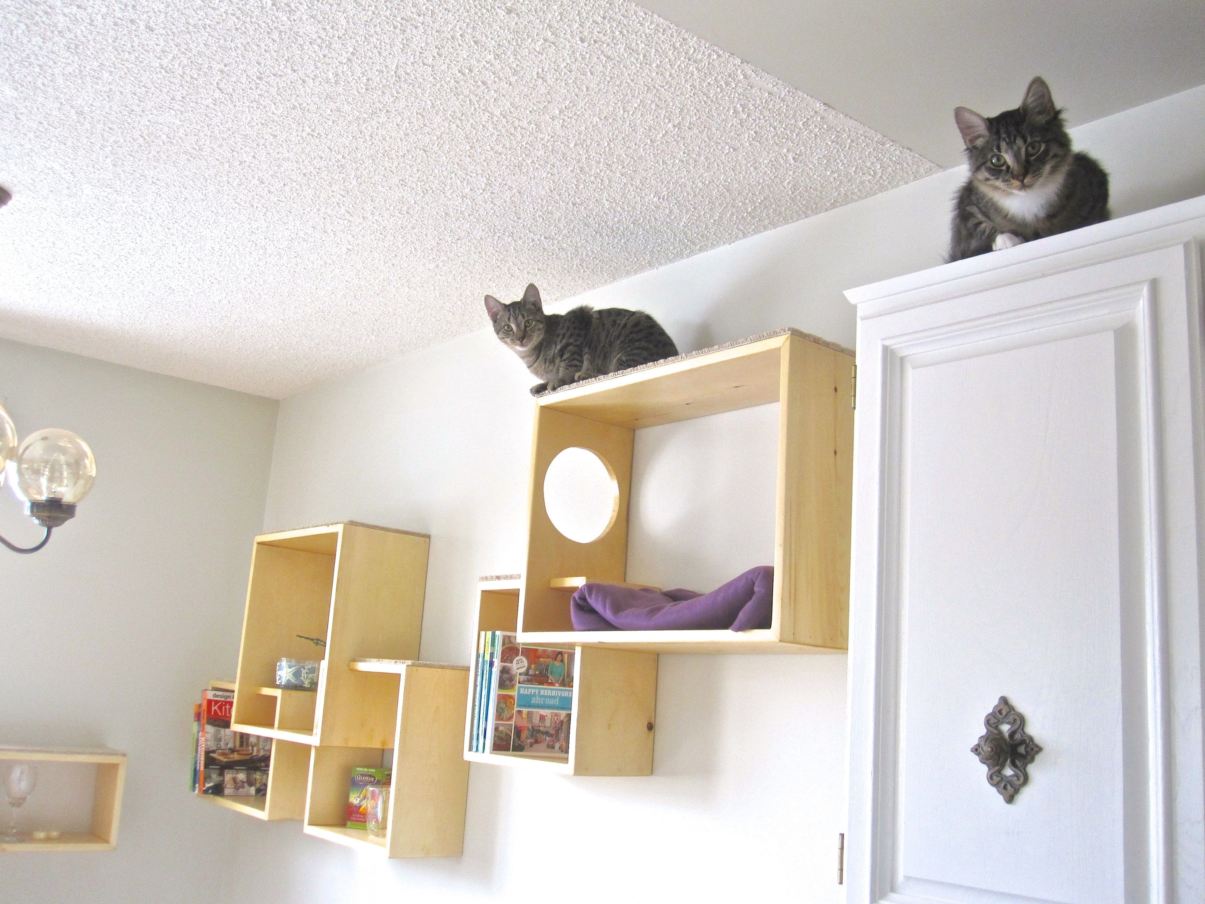 Use your wall space! Cat wall shelves, Cat shelves, Wall