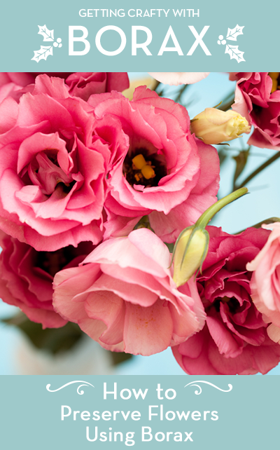 How To Preserve Flowers Using Borax