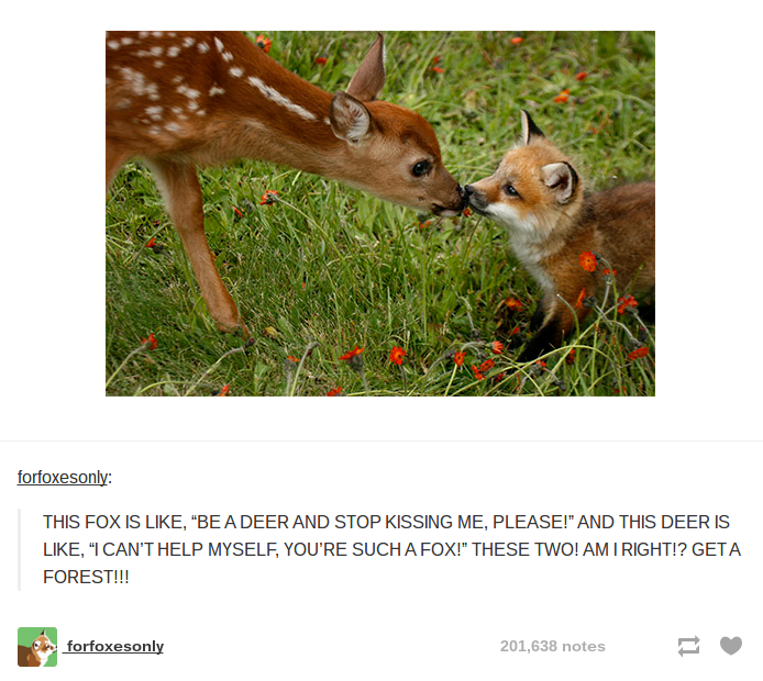 Top 2014 puns in Tumblr that will surely make you Laugh