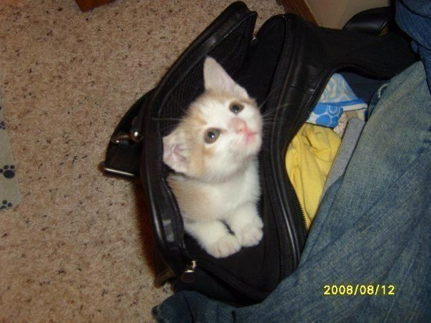 OMG - too cute!