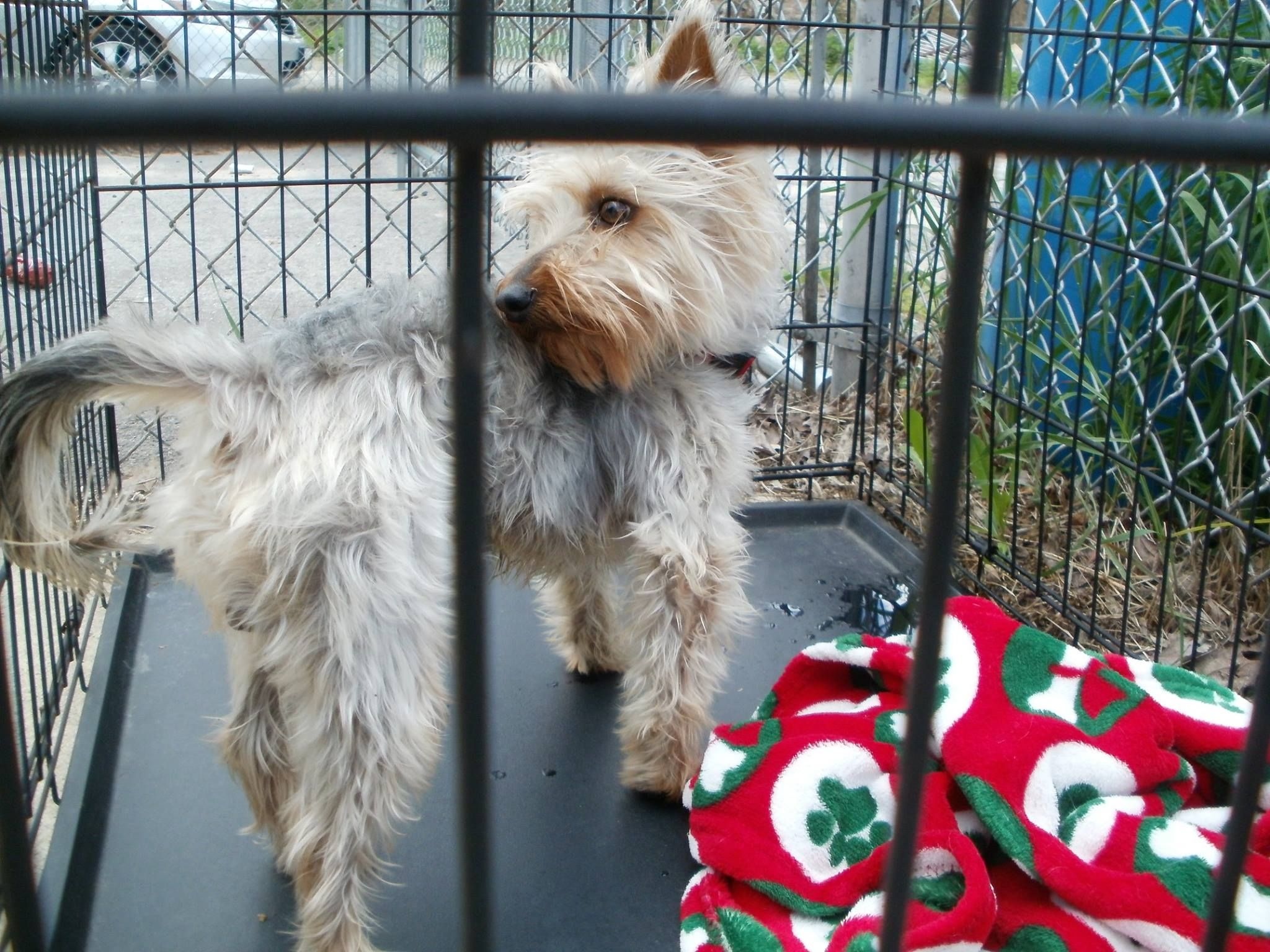 16+ North providence animal shelter images
