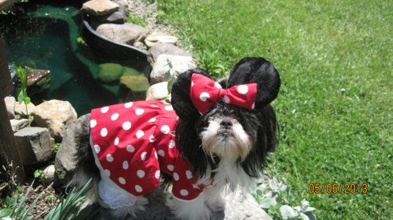 Minnie Mouse Dog Costume Jackienicole626 Do You Want G To Wear