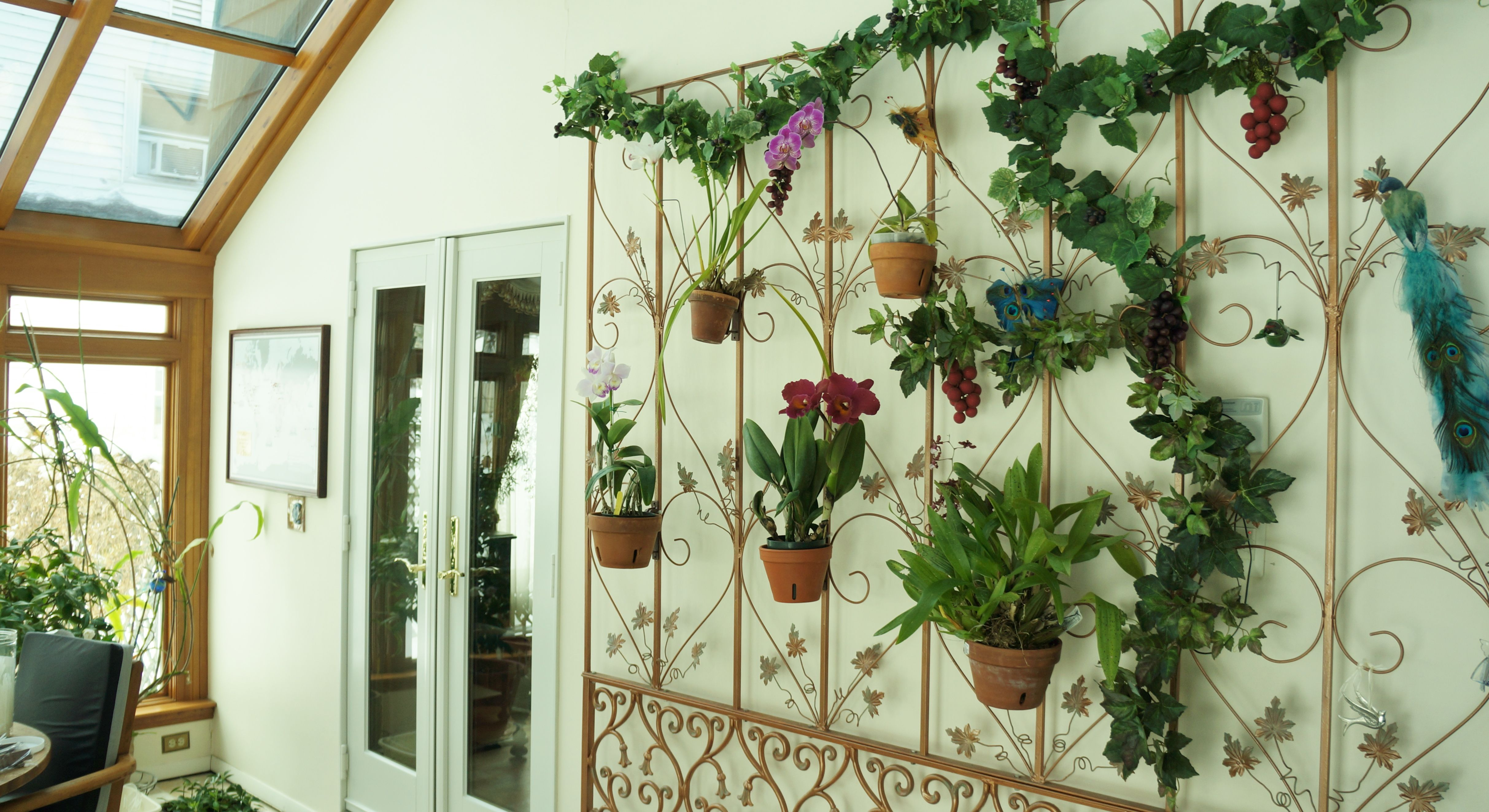 Orchid wall in a sunroom. DIY with a flattened room divider or tri ...