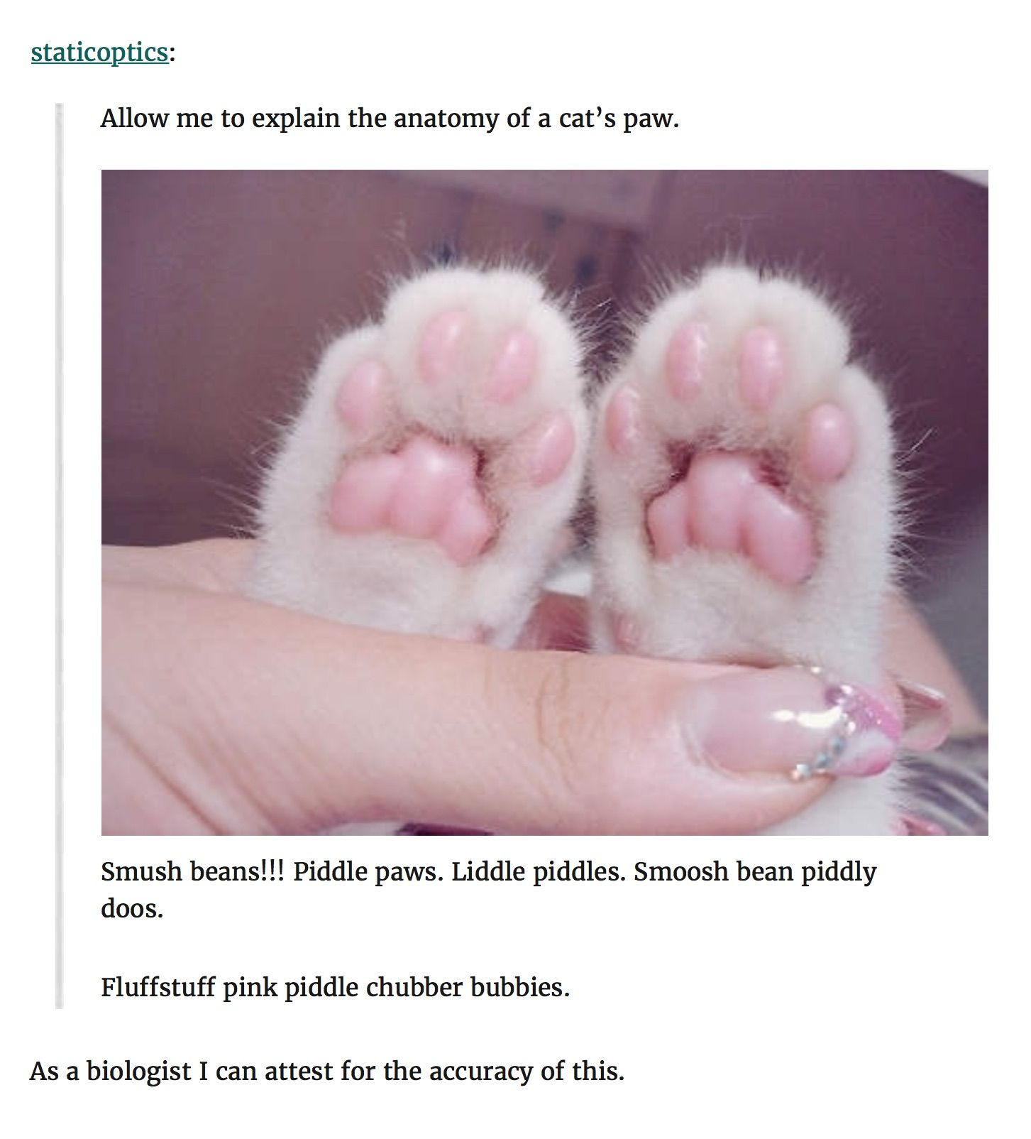 Allow Me To Explain The Anatomy Of A Cat S Paw Smush Beans Piddle Paws Liddle Piddles Smoosh Bean Piddly Doos Fluffstuff Pink Cat Paws Cats Cat Day