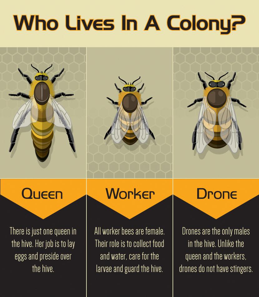 An Introduction To Beekeeping Bee Keeping Backyard