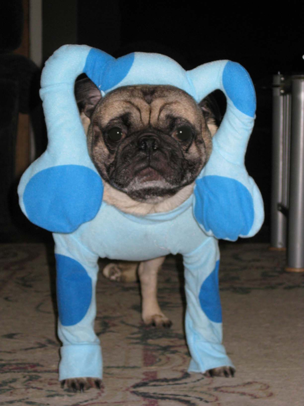 Blue S Clues Costume For Dog I Love It A Bunch More Dog