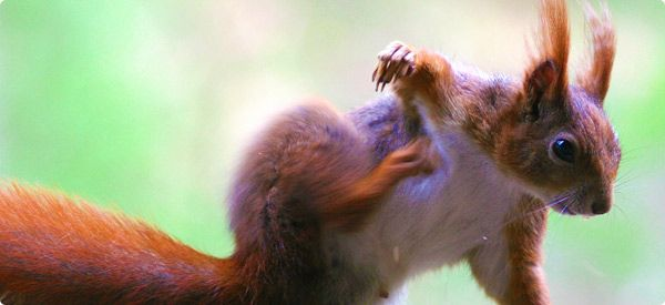 How To Keep Squirrels Out Of The Garden Squirrel Pinterest