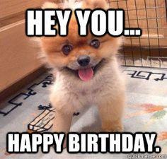 74141eb790e8572c1ad69b8a6737d9ab birthday quotes memes animals memes pinterest happy birthday,Birthday Meme Animal