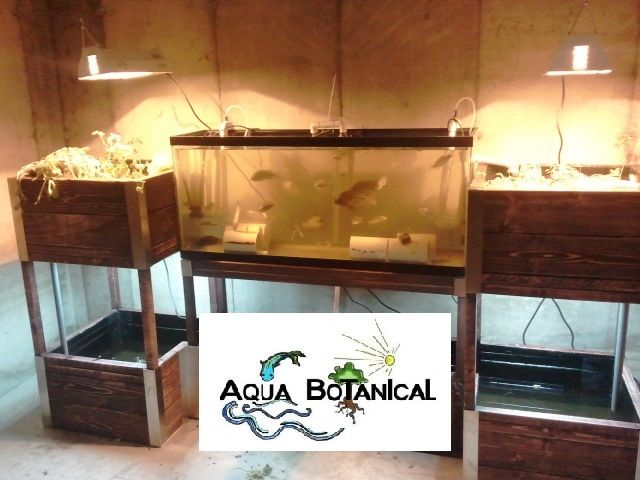 Indoor Aquaponics System#1