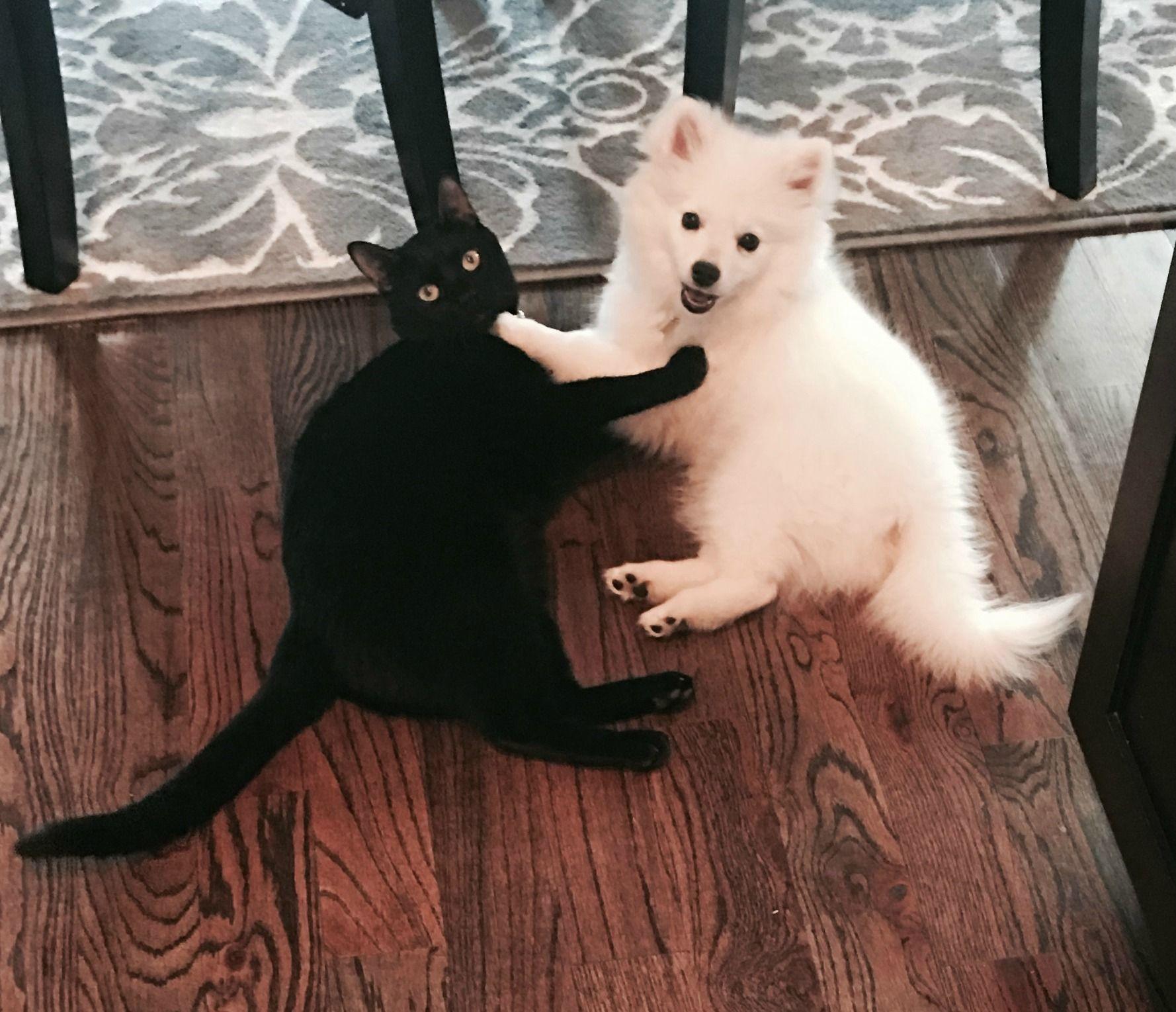 Forbidden love httpifttt2jvp8jf cute animals furry