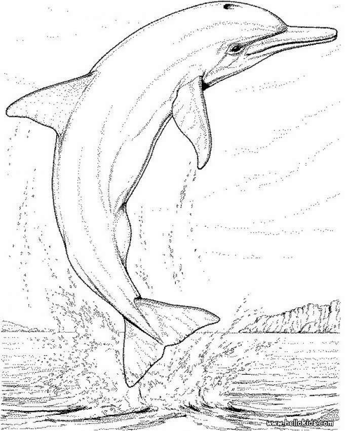 Big Coloring Pages Of Animals Page Dolphin