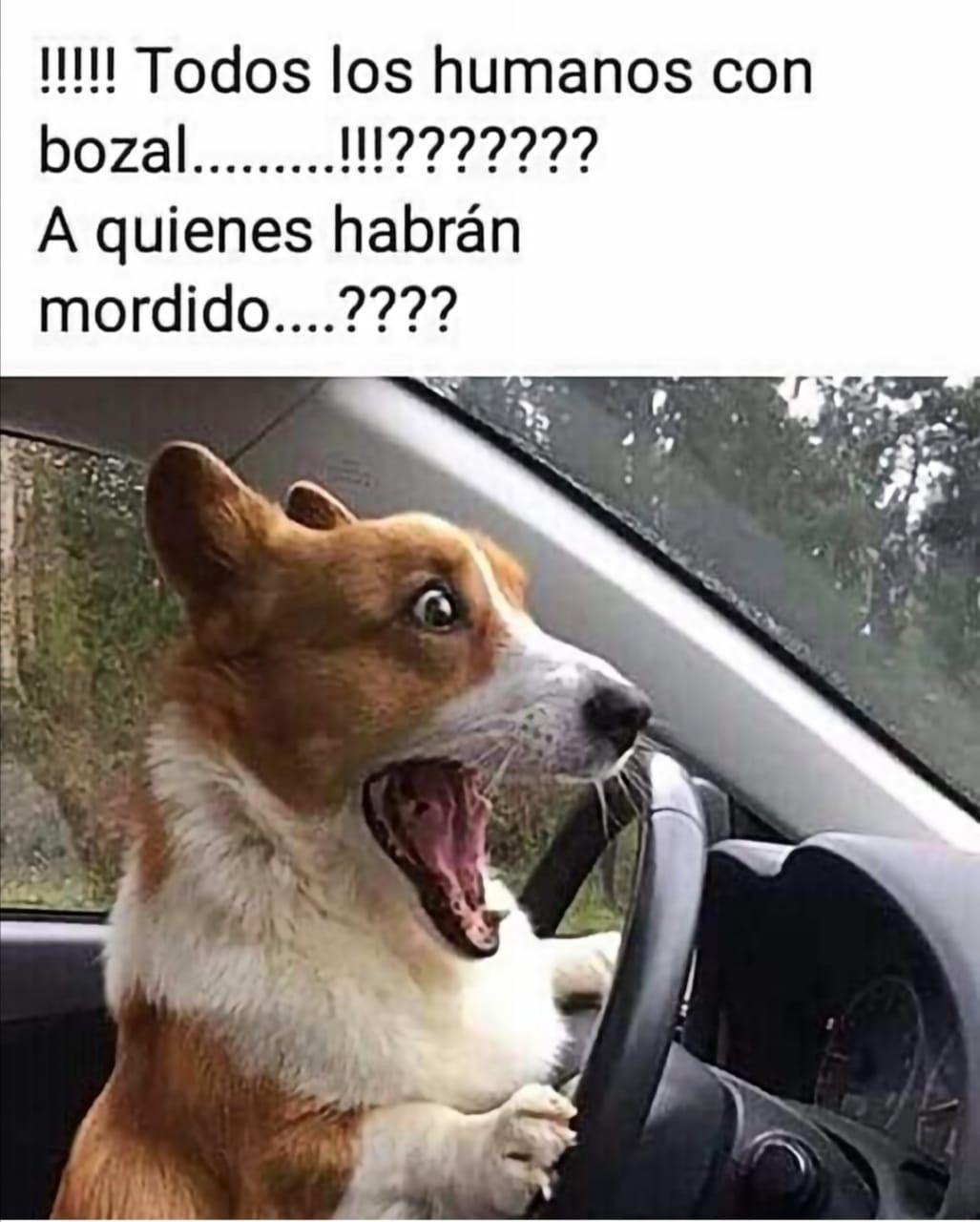 Pin De Julypaezc En Memes Humor Divertido Sobre Animales Memes Perros Memes Divertidos