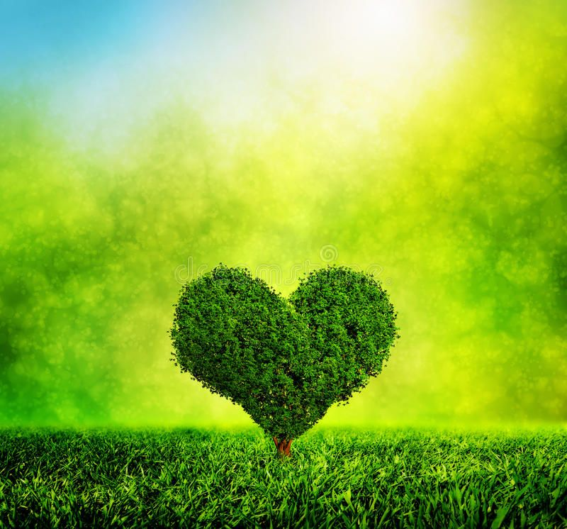 Heart Shaped Tree Growing On Green Grass Love Nature Environment Sunny Morni Sponsored Grass Green Nature Love Growing Tree Nature Green Grass