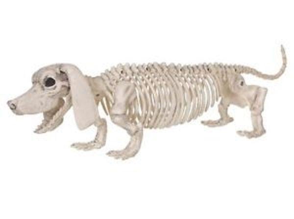 dachshund skeleton halloween decoration zombie skull bones dog life size dead