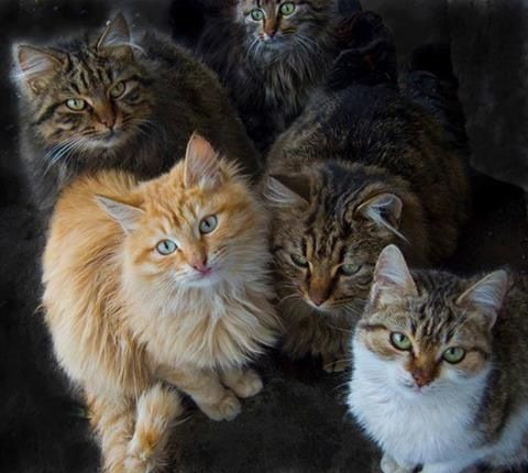 Catness is better in a group