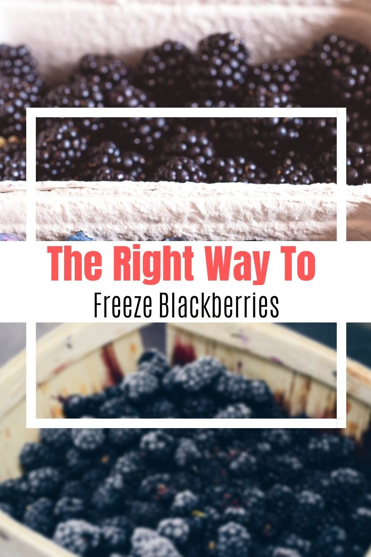 How to freeze blackberries properly how to freeze