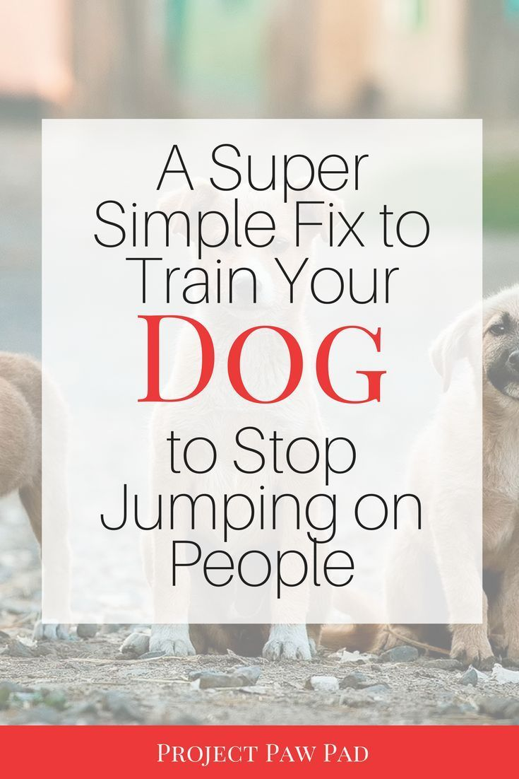 How To Train Your Dog To Stop Jumping On You Training Your Dog