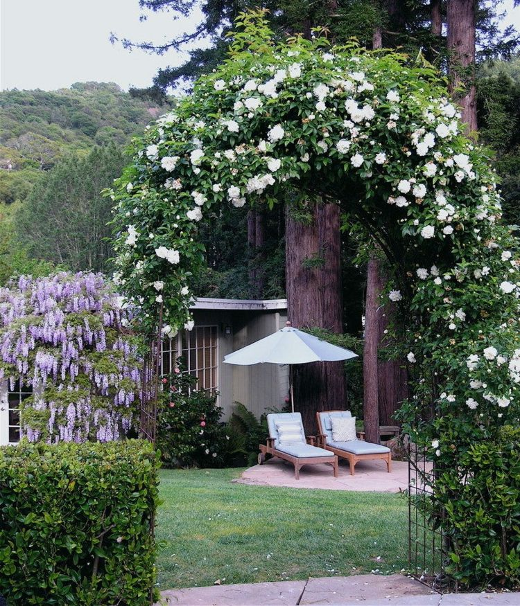 rankhilfe mit wei en rosen am garteneingang rose garden. Black Bedroom Furniture Sets. Home Design Ideas