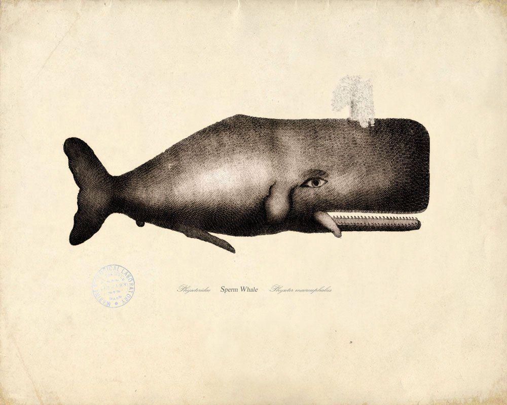 Scientific Illustration Free Vintage Illustrations Whale Illustration Whale Art Whale Print