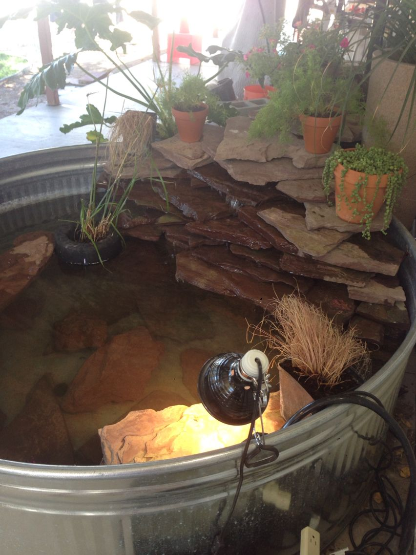 Redeared slider tank setup Turtle habitat, Red eared