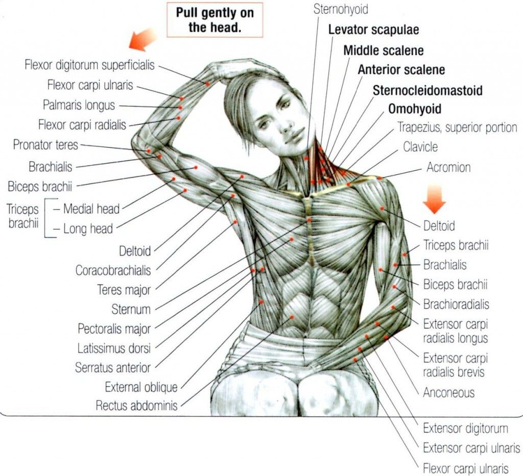 Stretching: How to Stretch the Neck and Trapezius #exercise #fitness ...