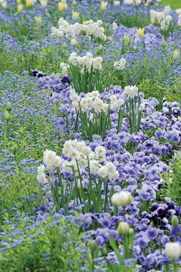 Pierwsze Wiosenne Kwiaty Weranda Pl Front Garden Plants Flowers