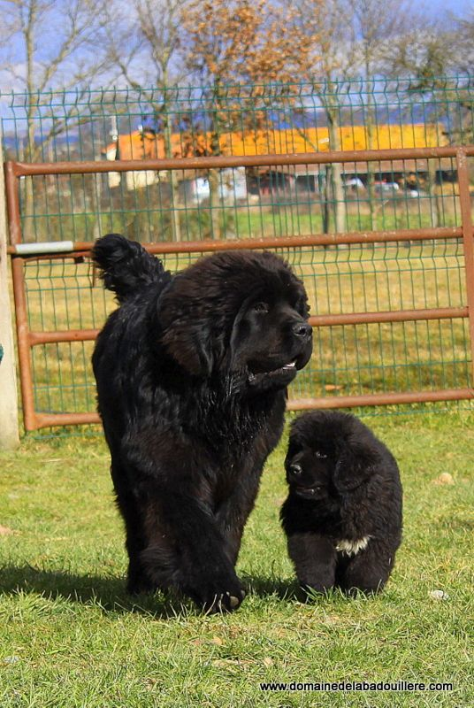 Adorable Cats Who Are Excited About Christmas Trees Dogs Newfoundland Dog Dog Toilet