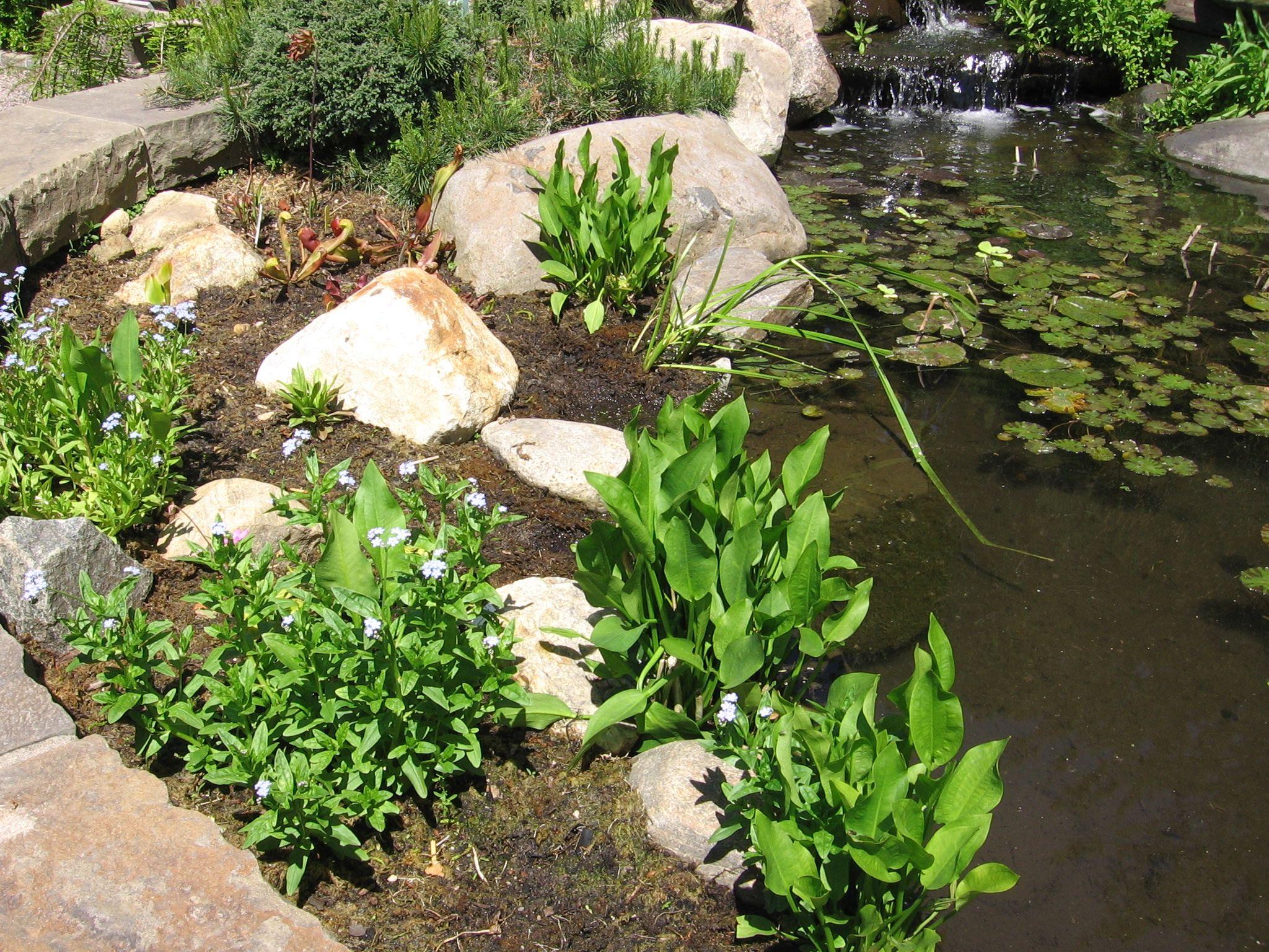 Plant Talk Nybg Bog Garden Pond Landscaping Ponds Backyard