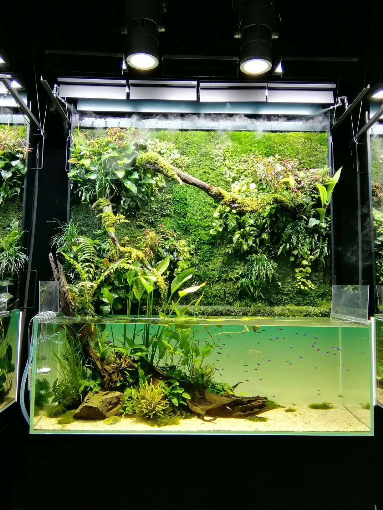 Nature Aquarium Takashi Amano 天野尚 水草水槽 淡水魚のアクアリウム テラリウム