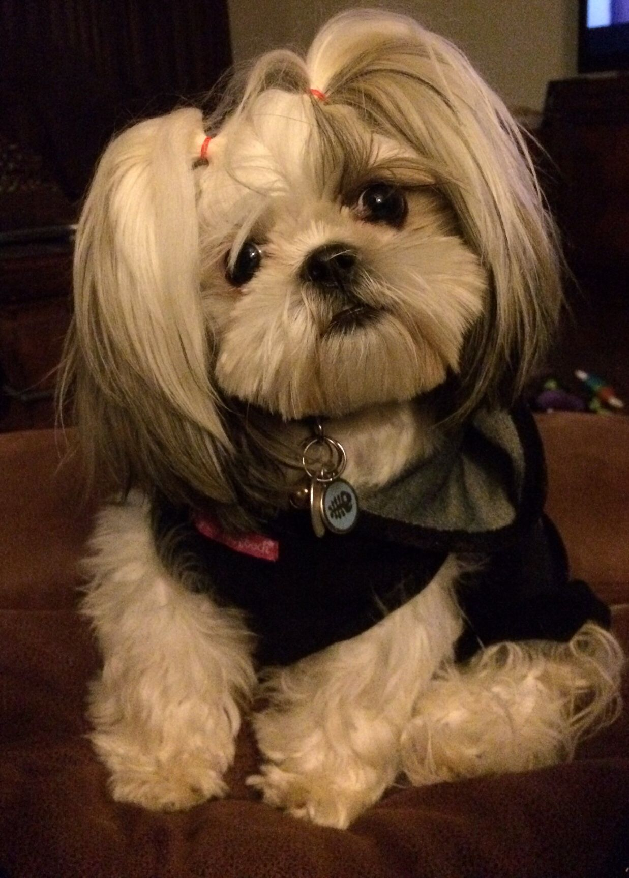 Do You Say Treat Toilettage Chien Chiot Shih Tzu Art A Theme Chien