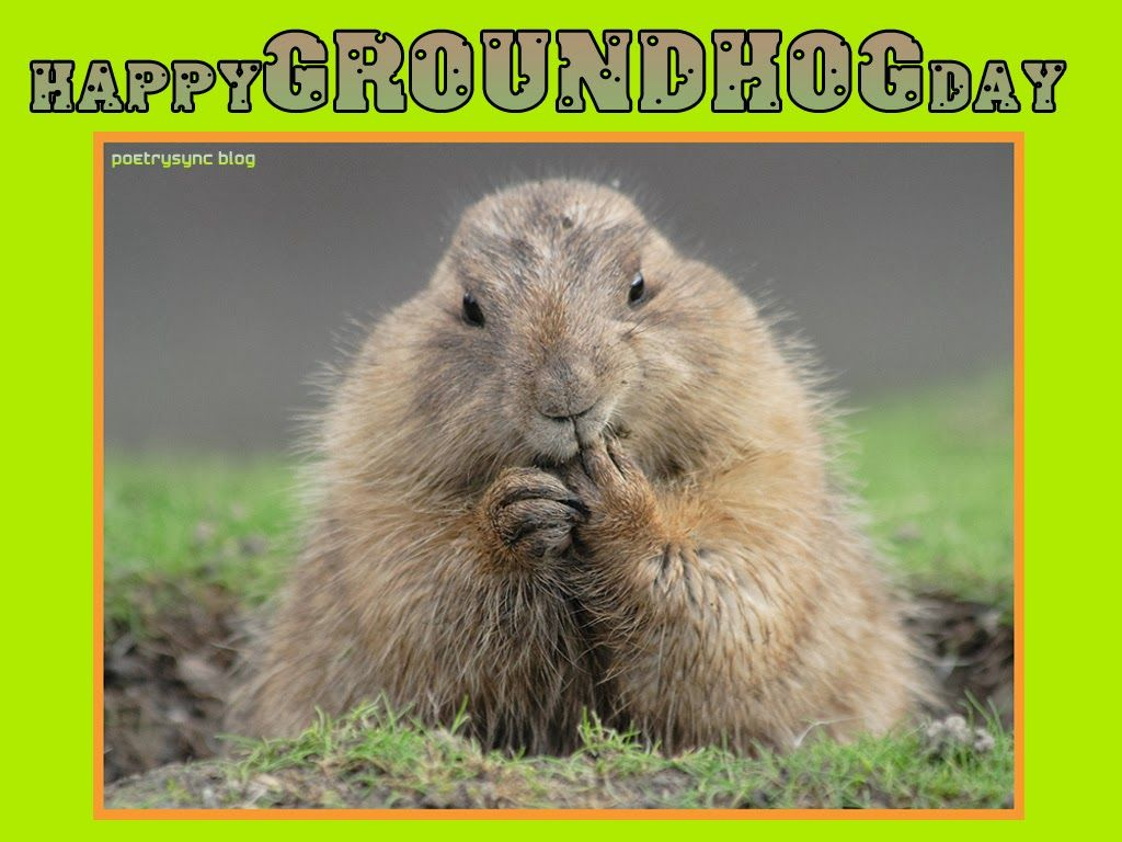 Happy groundhog day greetings card ecard images free groundhog day groundhog day quotes with wishes ecard images free m4hsunfo