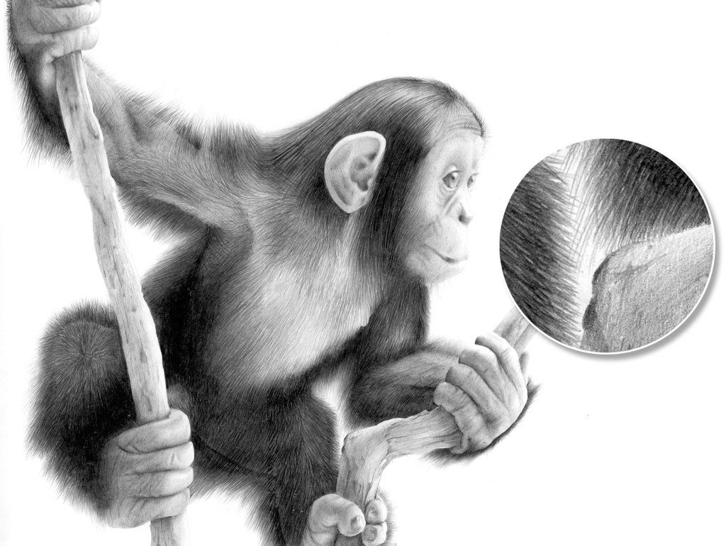 pencil drawings | Monkey Pencil Drawing by Stevep67 on ...