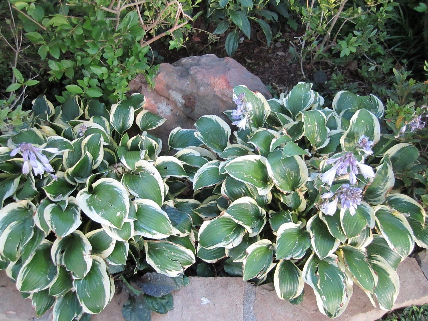 low maintenance landscaping ideas best plants and shrubs for