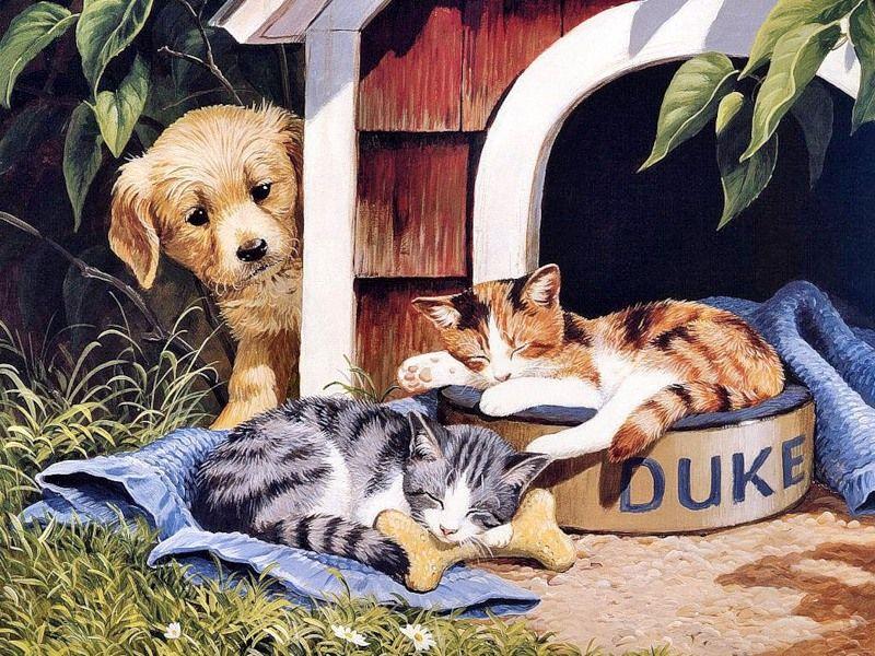 Прикольные кошки и собаки рисунки, для летних детей