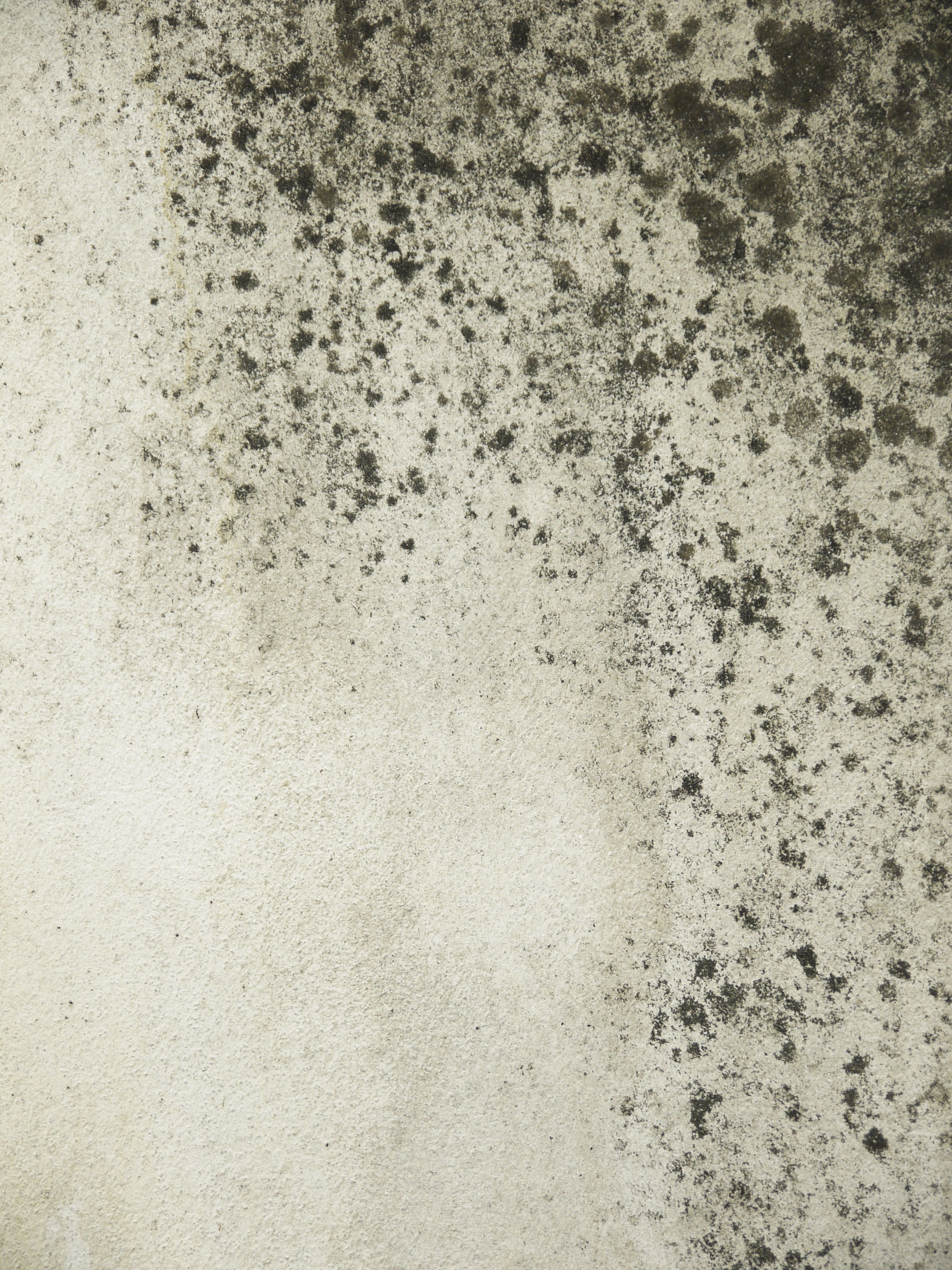 Mold Illness What It Is And How You Know If Have
