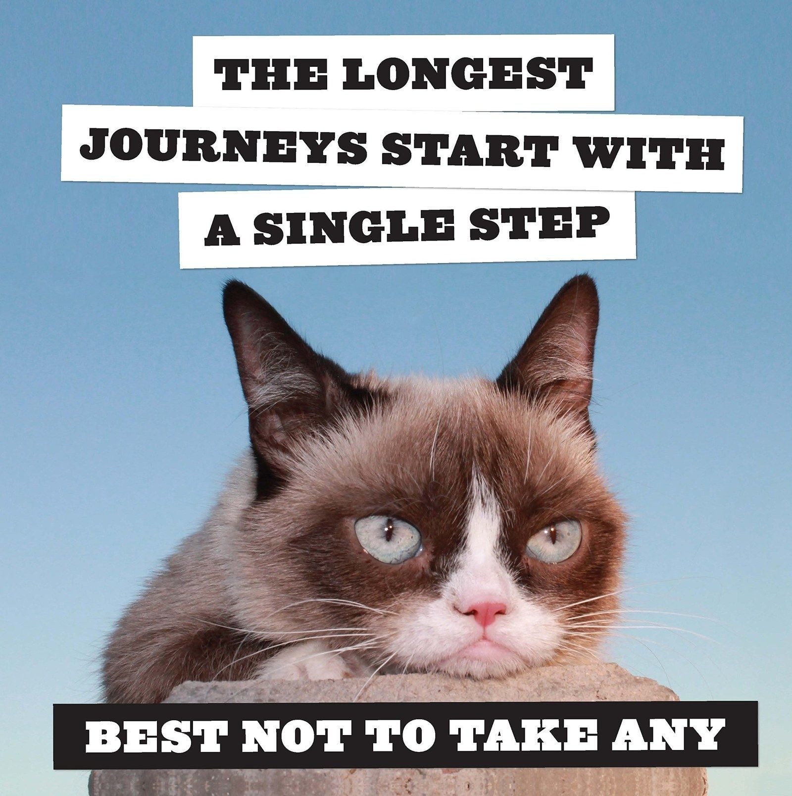 Tardar Sauce, otherwise known as Grumpy Cat, is dead at