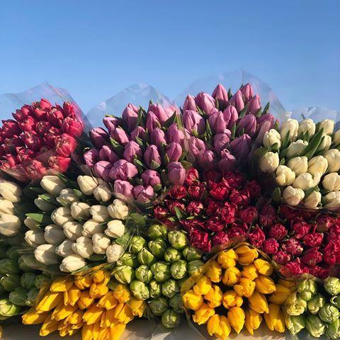 Оптовая продажа цветов новороссийск