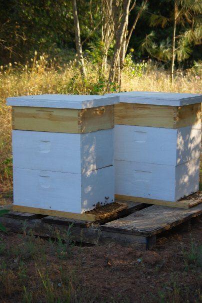 Aunt MaryLisa's bee hives. Mmmm, honey...