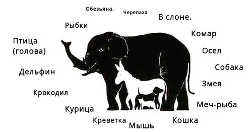 Сколько животных в картинке слона