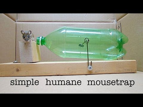 How To Build A Simple Humane Mouse Trap Out Of An Old Soda Bottle Homemade Mouse Traps Mouse Traps Mouse Trap Diy