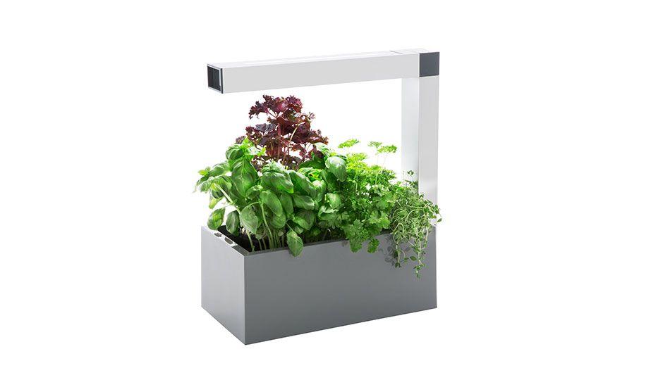 Monoqi Herbie Indoor Garden Grey Indoor Garten 400 x 300