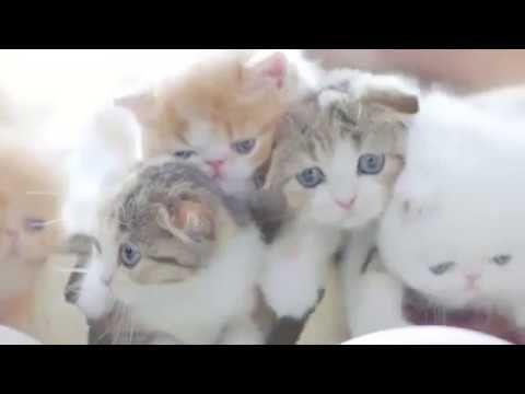 wonderful cats https://www.youtube.com/watch?v=GtQZrqoUnWQ