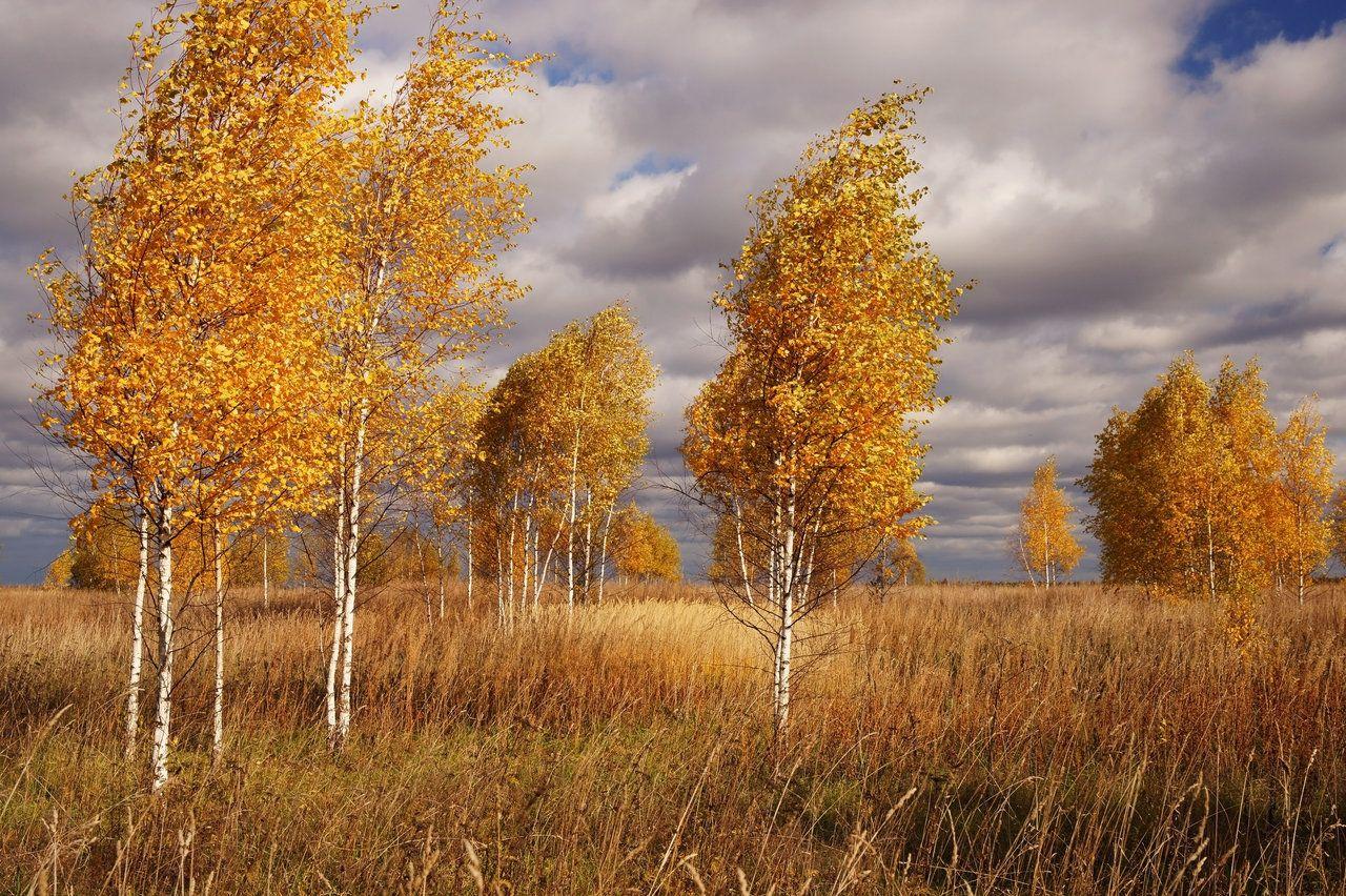 осень фото россия