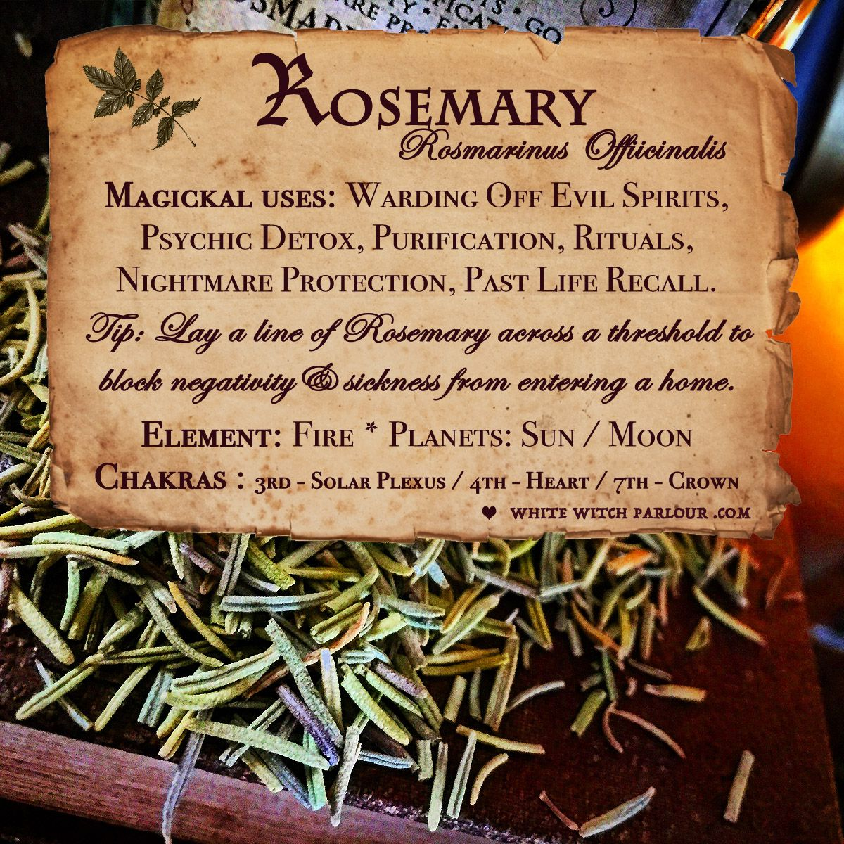 Rosemary Apothecary Dried Herbs For Warding Off Evil Spirits