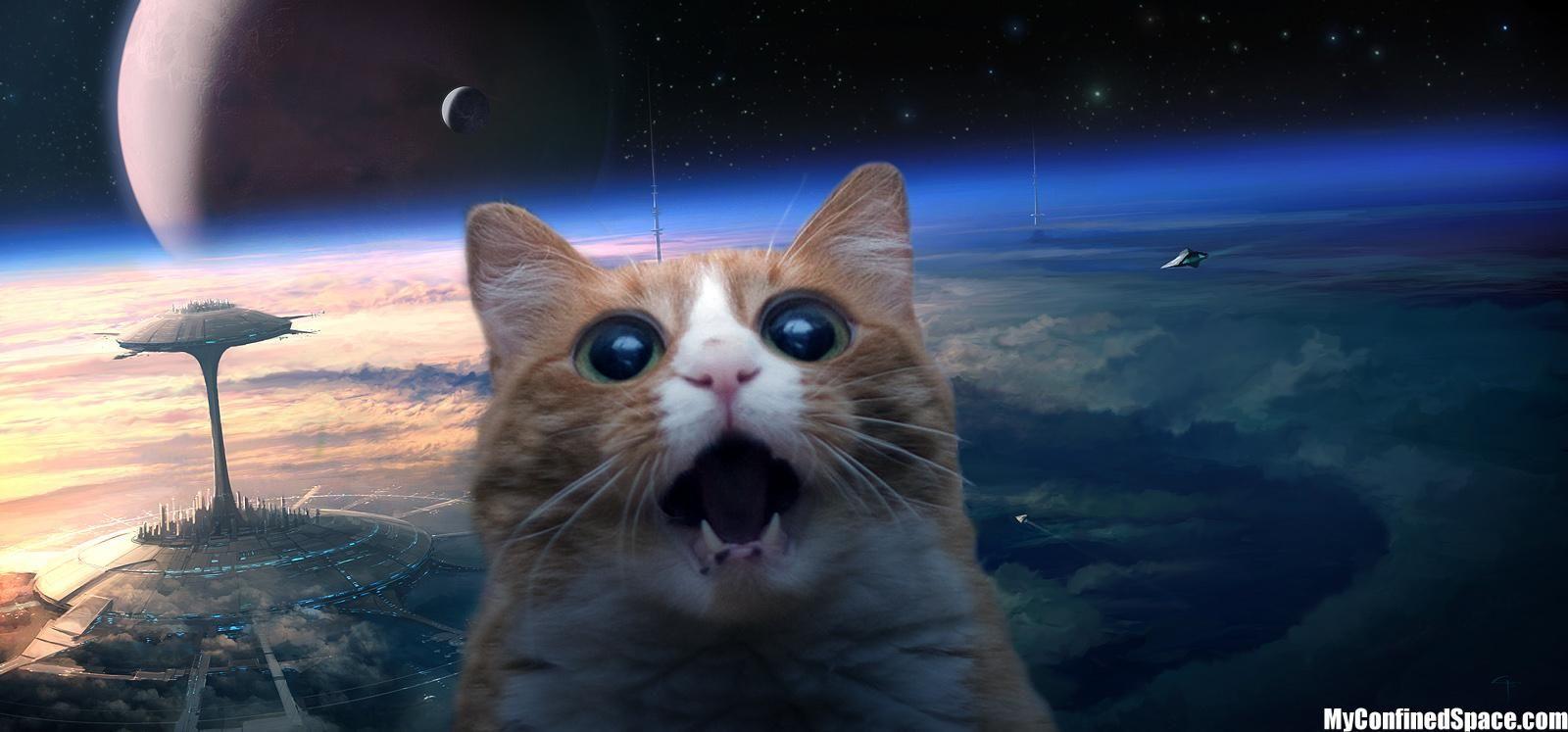 favorite. cats/space Pinterest Love