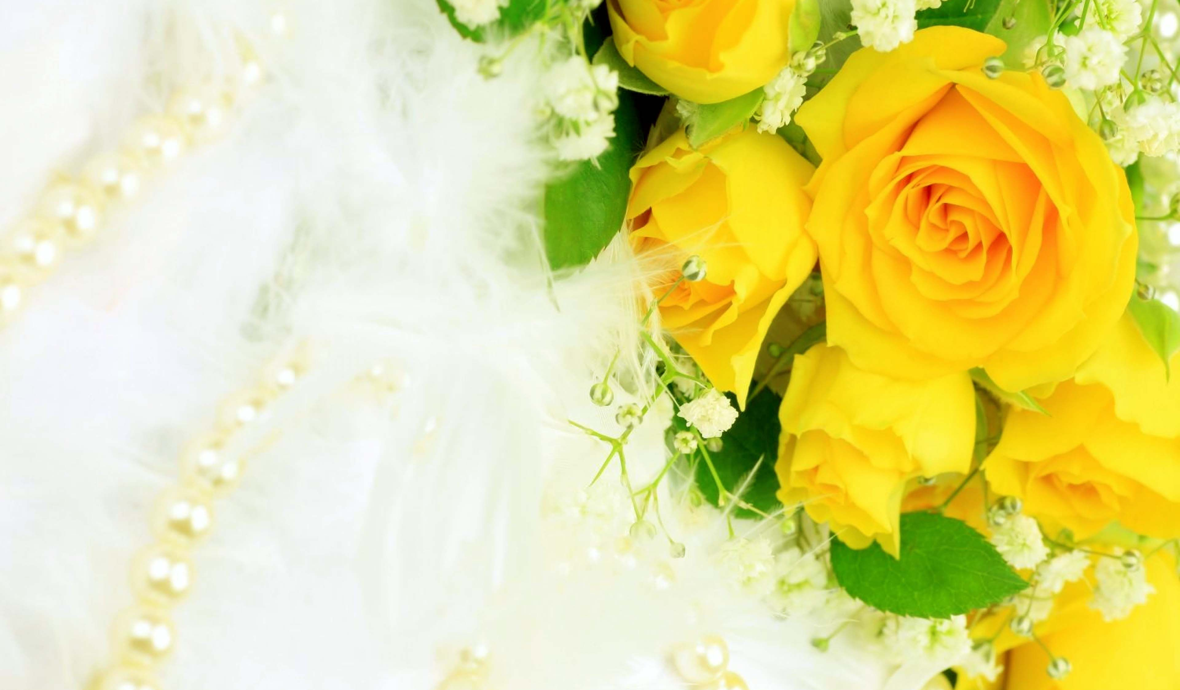 Hd wallpaper yellow rose - Stunning Yellow Roses Natural Beauty Images Hd Wallpapers