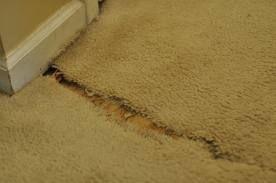 Bad Seams In Carpet Old Carpet Seams That Are Separating Can Be Repaired By Aa1 Carpet Carpet Repair Repair Cleaning Upholstery